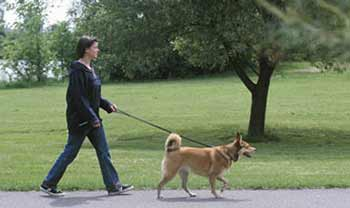 How To Walk Dog Off Leash