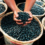 Vital Acai and acai berry for Weight Loss – A Review