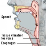 Esophageal Speech