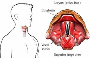 Laryngitis,Irritation or INFLAMMATION of the larynx, voice box, hoarseness or loss of voice,bacterial INFECTION,STREP THROAT